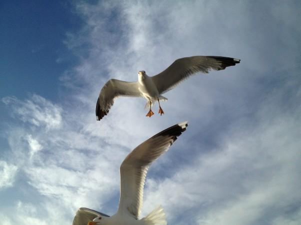 2. sea gulls